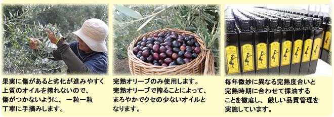 『完熟オリーブオイル(手摘み)』の3つのこだわり